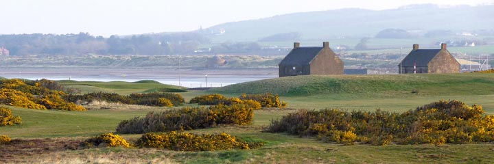 Banks of gorse on the traditional Scottihs links at Prestwick St Nicholas Golf Club